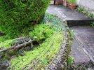 Pruning & weeding (1).JPG